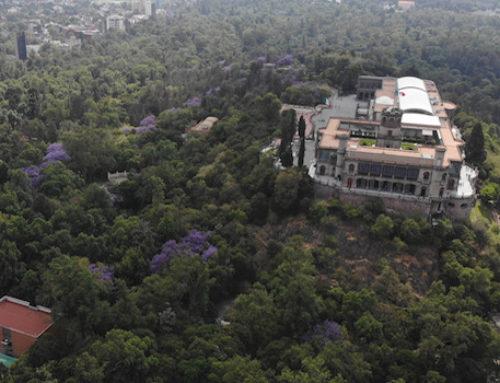 Invertirán mil 100 mdp en el rescate del bosque de Chapultepec
